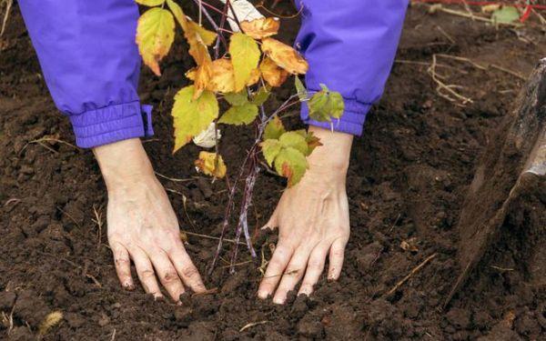 Co trzeba zrobić w ogrodzie w październiku - sadzenie, wykopywanie, pielęgnacja, przygotowanie do zimy